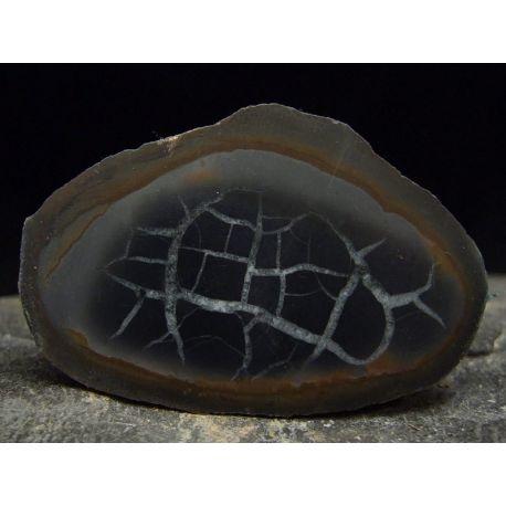 Septaria poligonalna - Maroko