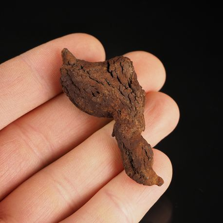 Koprolit - skamieniałe odchody dinozaura - Madagaskar